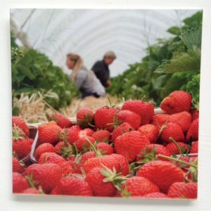 strawberry-gift-card